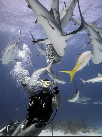Shark Week 2